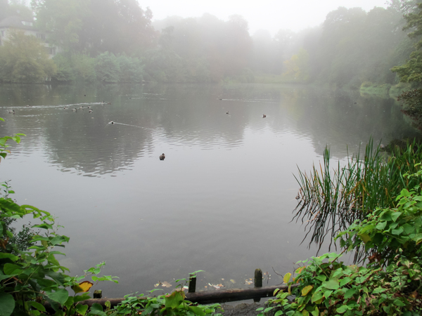 ducks on a foggy lake