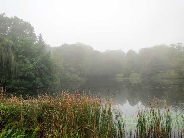 foggy lake idyll