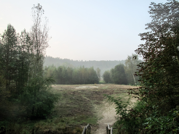 foggy autumn landscape 3