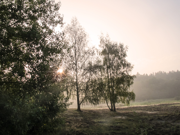 foggy morning light