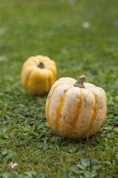 Squashes: Two squashes