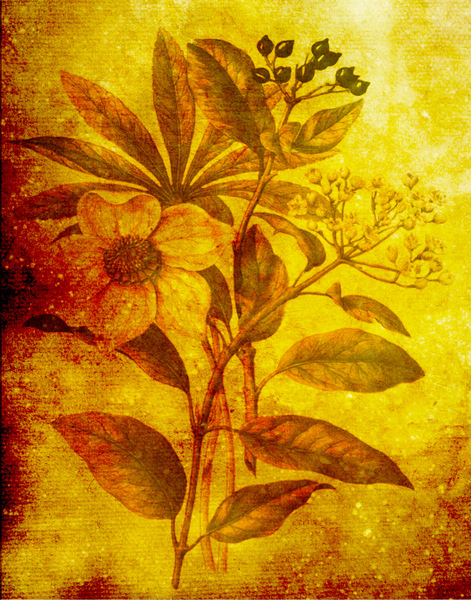 Botanical background: Botanical drawing was used for this warm floral texture