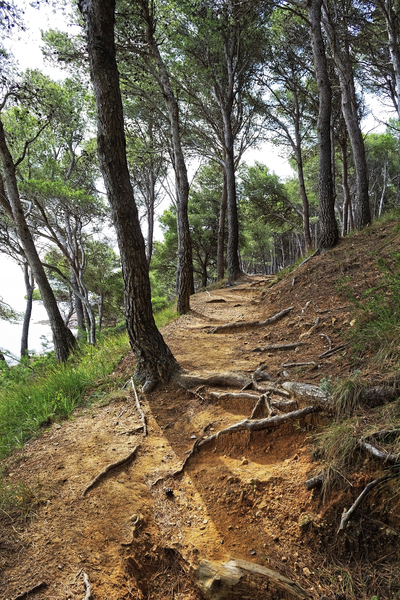 Woodland path HDR: A path through coastal pine forest in the Costa Brava, Spain. HDR image.