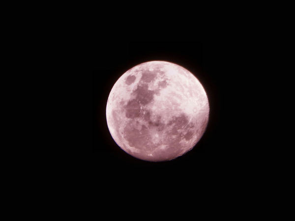 pink moon: pink evening view of shadows and craters on the moon