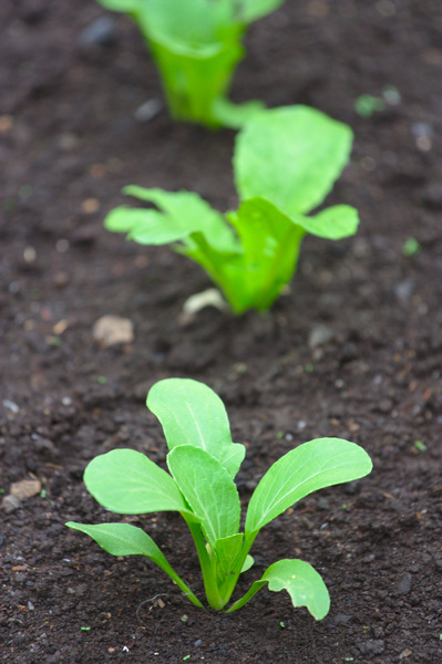 Seedlings: Seedlings
