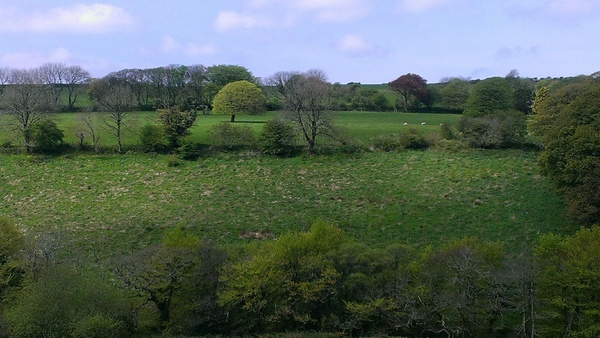 Cornish Countryside