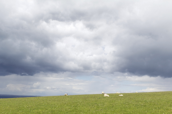 Sheep and a passing storm