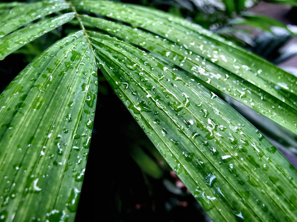 tropical raindrops1