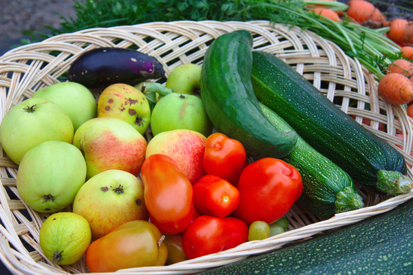Home garden produce: One season's harvest from our garden!