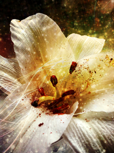 Flower with golden dust