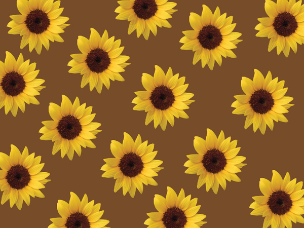 Sunflowers background 5