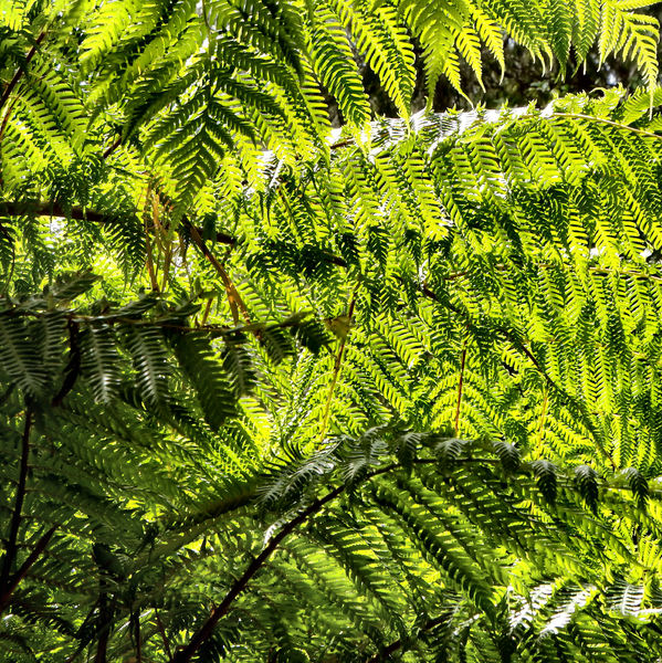 fern sunscreen1