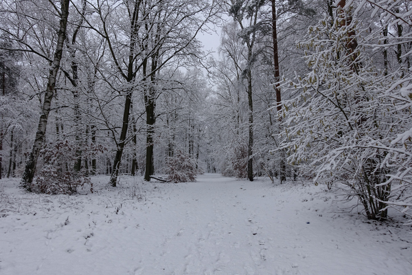 winter forest idyll 4