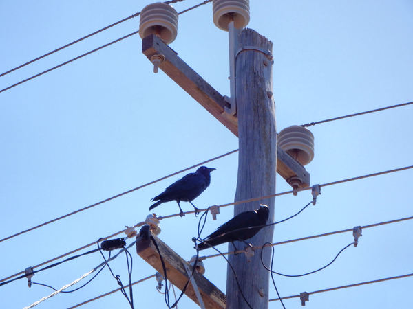 hotwired crows2