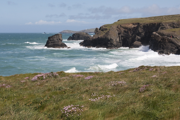 Coastline with wild flowers