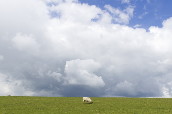 Sheep with a personal cloud