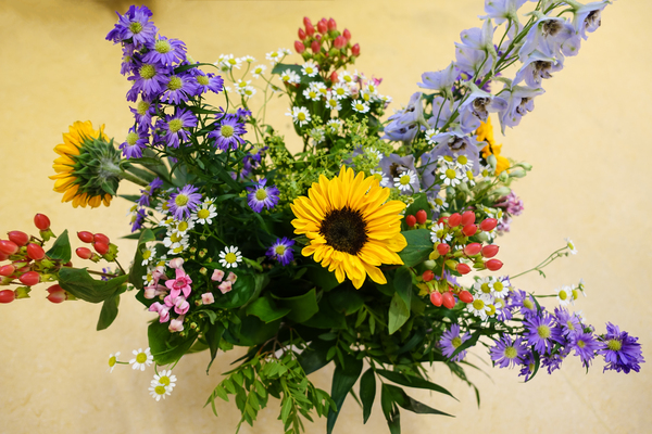 colourful summer flowers 2