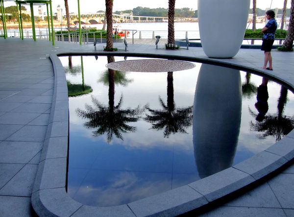 calm palm reflections1