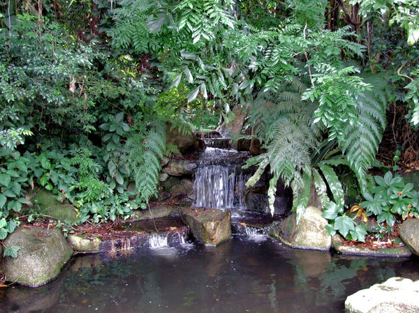 jungle waterfall3