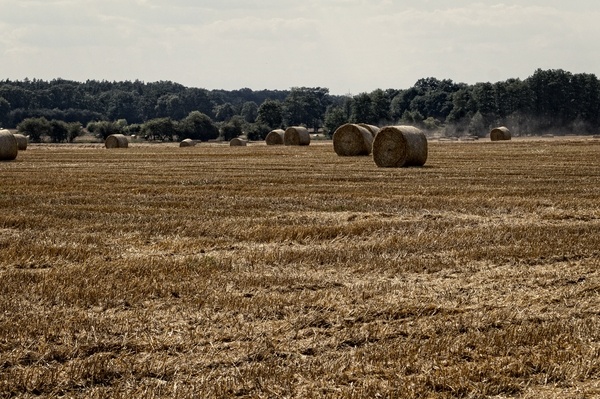 Harvest - bales of straw