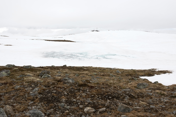High altitude habitat: Landscape of a high plateau in Norway, with melting snow revealing low-growing plants.