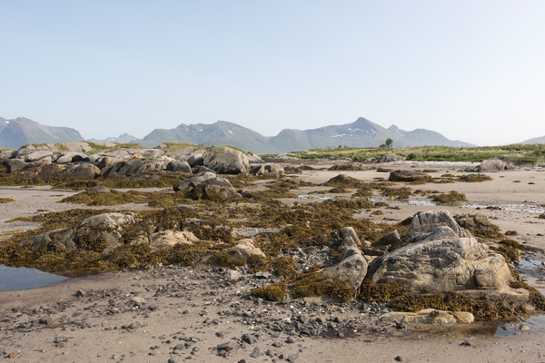 Low tide: Low tide in the Lofoten Islands, Norway.