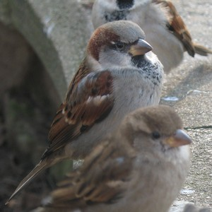 Sparrow 3: Some very cocky sparrow's in Disneyland Paris. I don't think Disney has copyright on the birds, so...  Hmm, maybe they do have copyrigt on the wall... It is an object...