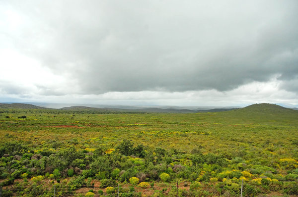 Karoo landscape: Karoo landscape near Calitzdorp, South Africa. NB: Credit to read