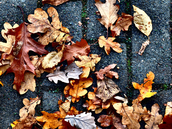 Leaves on concrete: Dry leaves on concrete