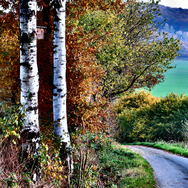 Birch at the road: Birch at the road