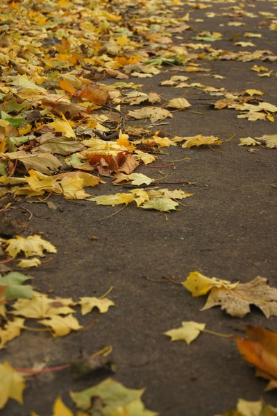 fallen leaves: Autumn in Poland