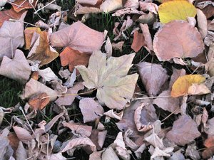 autumn leafs: no description