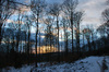 winter evening in the forest: winter evening in the forest