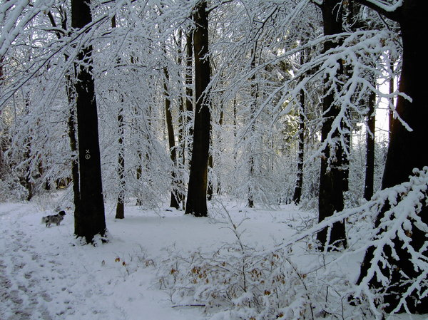 snowy forest 2: snowy forest 2