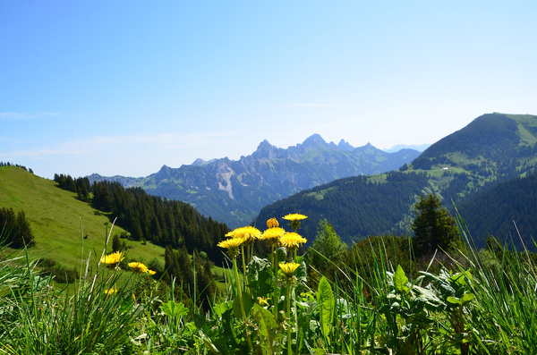 dandelions in the mountains: dandelions in the mountains