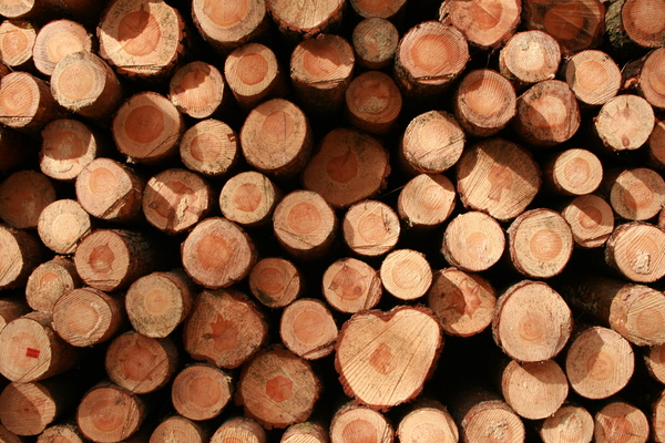 Wood pile: A pile of wood stored for further processing.