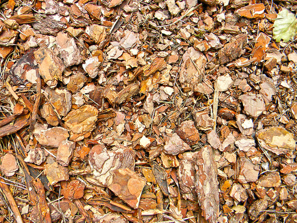 Wood pile 1: A pile of wood stored for further processing.