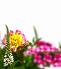 decorative summer flowers: decorative summer flowers