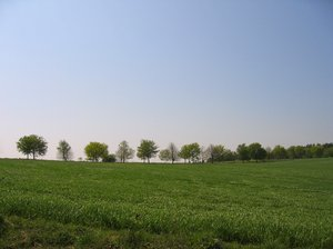 tree row on a spring meadow: tree row on a spring meadow