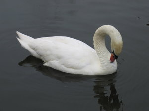 swan's cleaning: swan's cleaning
