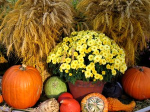 thanksgiving arrangement: thanksgiving arrangement
