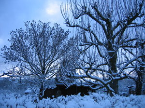 dawn in winter: dawn in winter spreads blue light over the trees