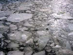 ice floes: ice floes