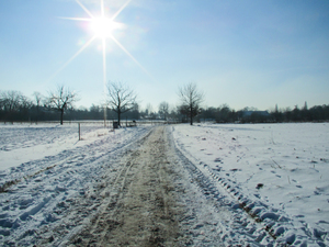 winter scenery: winter scenery