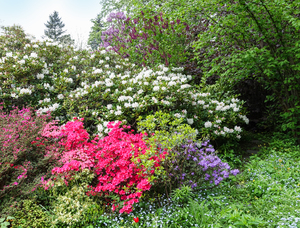 colourful garden bushes: colourful garden bushes
