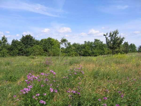 summertime wild flower meadow: summertime wild flower meadow