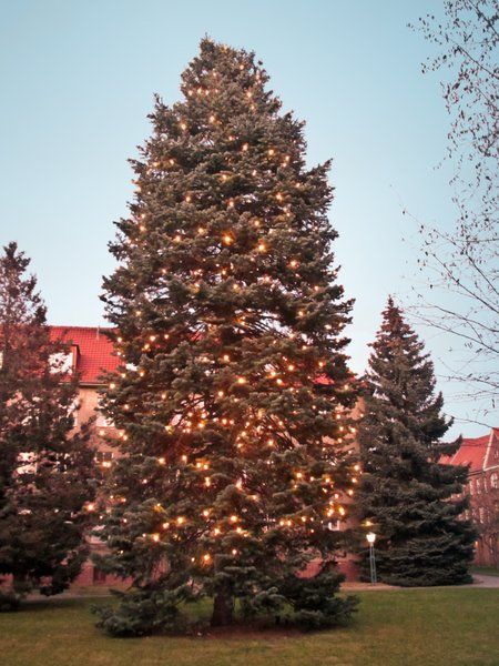 huge christmas tree: huge christmas tree