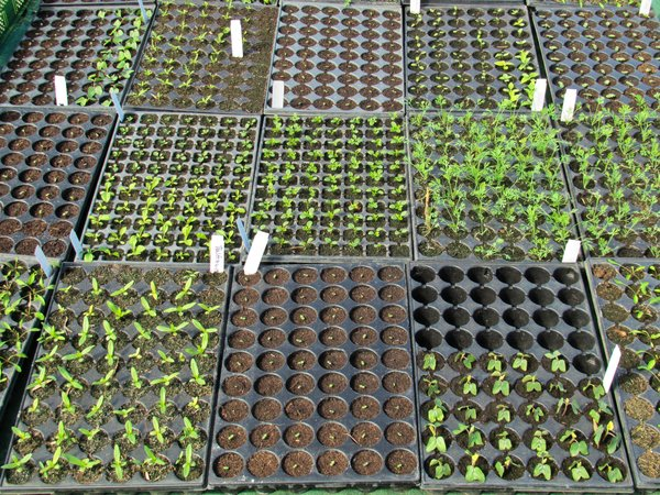 organic seedlings: organic seedlings