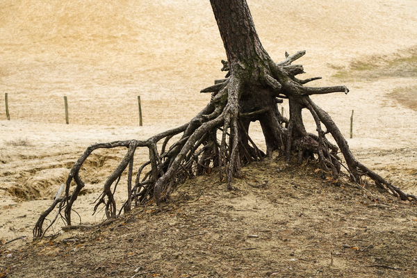 free tree roots: free tree roots