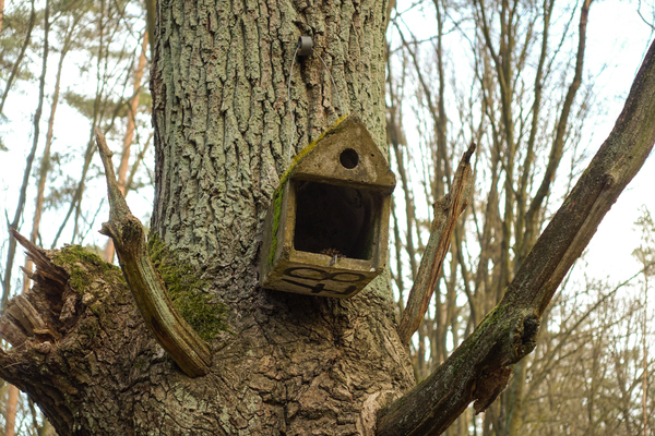 bird house in a tree: bird house in a tree - they even have house numbers